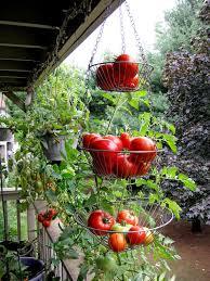 balcony vegetable garden in the city condo in connecticut