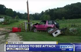drunk high couple crash their pink geo tracker into massive beehive
