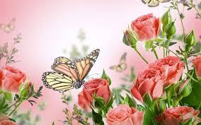 flowers butterflies butterfly bokeh j wallpaper 2560x1600