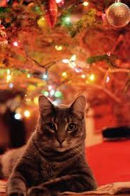 cat christmas 13 cheery christmas photos of cats and dogs mnn nature