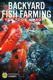 backyard fish farming how to raise fish for food or profit at