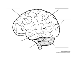 printable blank brain free download clip art free clip art