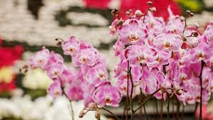 All About Flowers - the calyx plant sale is selling plants for a 1 ellaslist