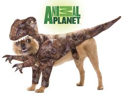raptor dog costume dress up your dog people will love it like