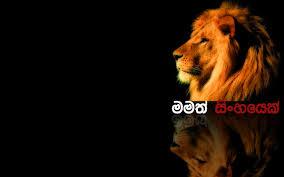 Sri Lanka Flag Lion Sri Lanka Lion Best Lion Image And Photo Hd 2017