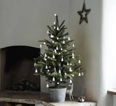 live christmas tree live christmas trees make memories
