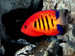 red coral fish photography that i love pinterest red coral