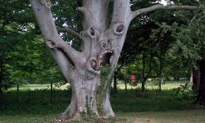 Tree Meme - hell tree damn nature you scary know your meme