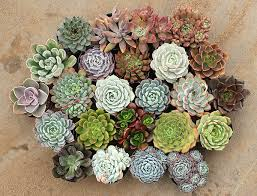 succulent arrangements fall in with succulents 27east