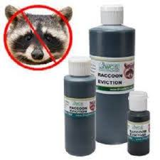 How To Get Rid Of Raccoons In Backyard How To Get Rid Of Raccoon Problems Predators Forum At Permies