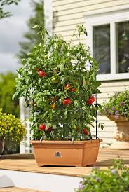 Container Water Gardens Growing Gardening How To Make A Self Watering Container Best Pots