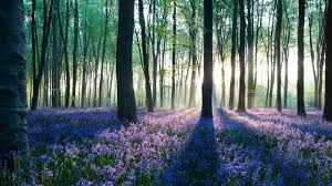 photo collection forest widescreen hd wallpapers