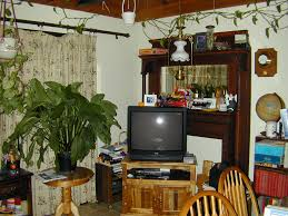 home decor plant home decor plants living room with plant inspirations picture