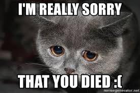 Sorry Meme - i m really sorry that you died sad cat meme generator