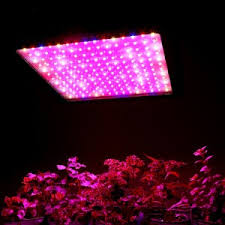 horticultural led grow lights apollo horticulture led 900w grow light review prices