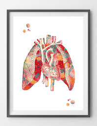 Heart Wall Anatomy Heart And Lungs Watercolor Print Cardiovascular And
