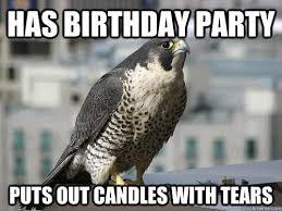 Funny Bird Memes - pin by emilie josephine on mamma meme pinterest