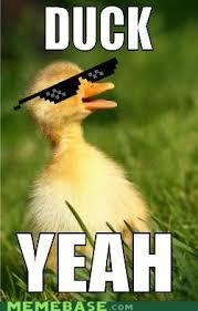 Yeah Memes - duck yeah memebase funny memes