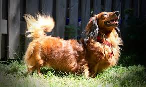 all dog rescue all dog rescue all dog rescue