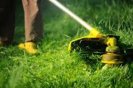 Types Of Plant Disease - 5 common types of lawn disease enlighten me