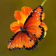 butterfly by absher butterfly kisses