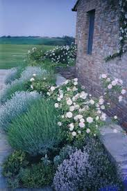 plants native to france 25 best tuscan garden ideas on pinterest tuscany decor tuscan