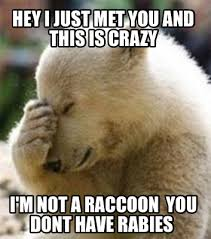 Meme Generator Raccoon - meme maker hey i just met you and this is crazy im not a raccoon