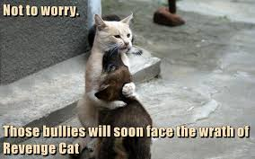 Soon Cat Meme - lolcats bullies lol at funny cat memes funny cat pictures with