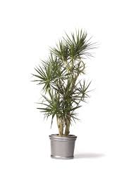plants that don t need sunlight to grow beautiful unique indoor plants 68 cool house plants to grow unique