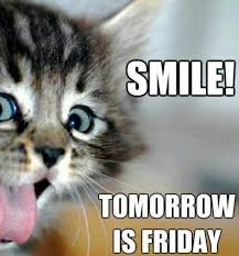 Almost Friday Meme - 45 best almost friday images on pinterest animales funny
