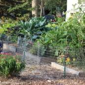 creative vegetable gardener the best vegetables to grow in a