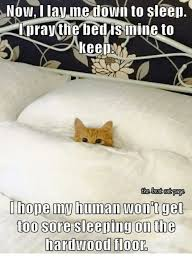 Sleeping Cat Meme - now i lav me down to sleep lpray the bed is mine to keen the best