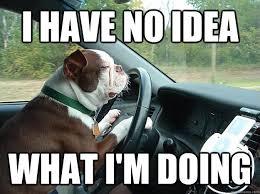 Driving Memes - dog driving memes quickmeme