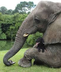 home decorators elephant her 17 best images about e l e p h a n t on pinterest friendship