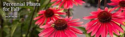 perennial flowers border sun shade perennial plants seeds