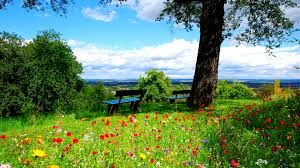 widescreen trees benches flowers nature hd on photo images for