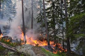 Wildfire History by Image 5 Forest Fire In årjeng Sweden Photo Credit Ken Olaf Storaunet Nibio 1 Jpg