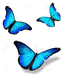 40 top selection of butterfly pic