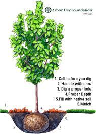 tree service experts layton utah kaysville planting small to