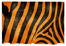 free stock photos rgbstock free stock images tiger stripes