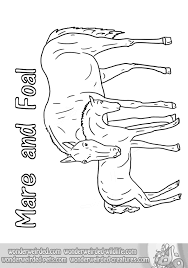 free horse coloring pages echo u0027s horse coloring book page