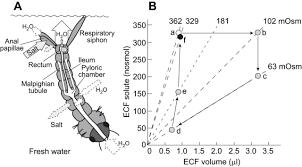 the plasticity of extracellular fluid homeostasis in insects
