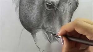 horse drawing pencil youtube
