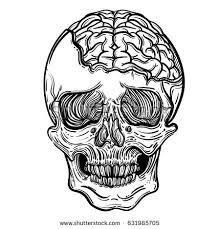 vector illustration human skull brains stock photo photo
