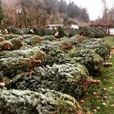 boy scout christmas tree fundraiser home facebook