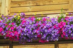 blumen fã r balkon balkon mit schönen rosa blumen stockfoto bild 46911328