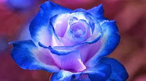 blue and purple flowers hd wallpapers desktop blue flower hd wallpapers
