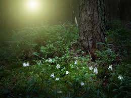 Deep Forest Green 134 Best Into The Deep Forest Images On Pinterest Dark