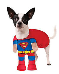Halloween Costumes Puppies Dog U0026 Cat Costumes Pet Halloween Costumes Spirithalloween