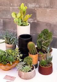Indoor Plant Arrangements Best 25 Indoor Cactus Garden Ideas On Pinterest Indoor Cactus